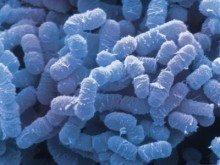 microscopische bacterien in de mond